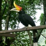 Malaysia 2013 Trip Report - Gary Atkins